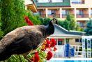 Коледа в Македония, СПА хотел Сириус 4*, Ранни записвания