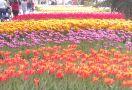 Фестивал на лалето: с включени парк Емирган, панорамна обиколка и МОЛ Форум