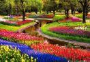 Цветна пролет 2020 в Холандия - парка Keukenhof и Амстердам