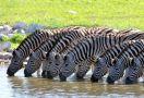 Сафари и плаж в Кения, 18-27.02.2022г, група