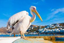 Шикозна почивка на остров Миконос, 7 нощувки