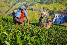 Екскурзия до Шри Ланка - благословената земя, 30.01 - 08.02.2018 г.