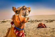ПРОМО Почивка в Дубай, 7 нощувки 3*