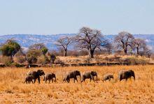Екзотично сафари в Танзания и почивка на о-в Занзибар 05–14.02.2021г.