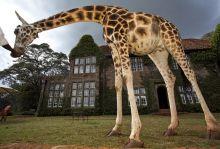 В прегръдката на Кения - сафари и плаж, Зима 2021, Супер промо